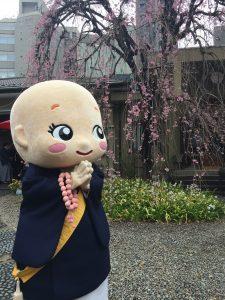 桜さん、こんにちは!