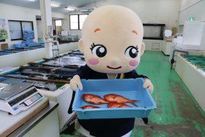 寄ってらっしゃい、見てらっしゃい! 新鮮な地魚ですよ~ 重いよ~